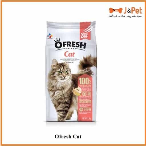 Ofresh Cat