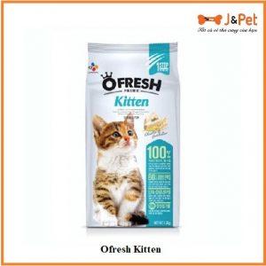 Ofresh Kitten