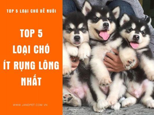 Top 5 Loai Cho It Rung Long Nhat