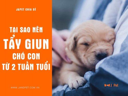 Tai Sao Nen Tay Giun Cho Cho Con Tu 2 Tuan Tuoi