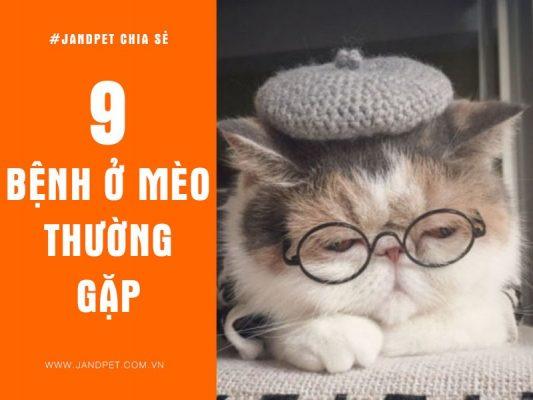 9 Benh Thuong Gap O Meo
