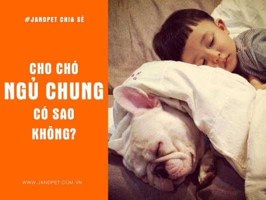 Cho Cho Ngu Chung Co Sao Khong