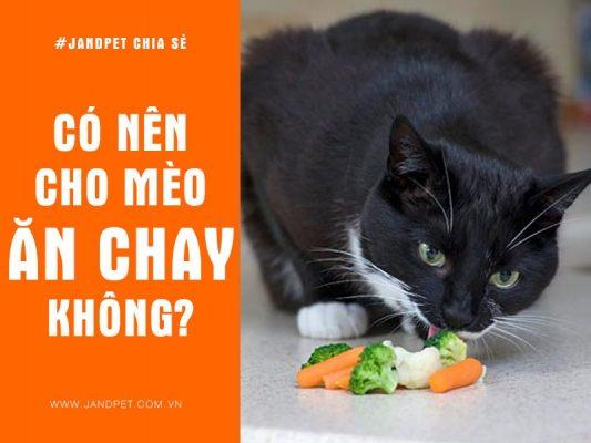 Co Nen Cho Meo An Chay