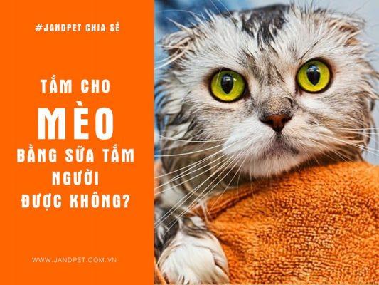 Tam Cho Meo Bang Sua Tam Nguoi Duoc Khong