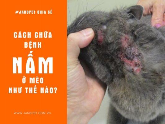Cach Chua Benh Nam O Meo