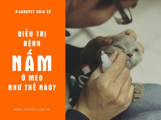 Dieu Tri Benh Nam O Meo
