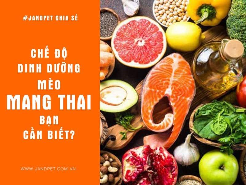 Dinh Duong Cho Meo Mang Thai
