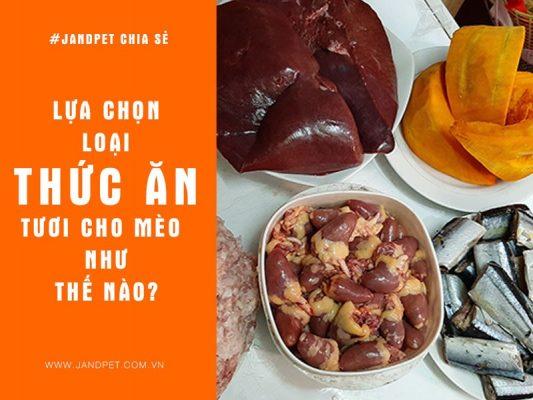 Lua Chon Thuc An Tuoi Cho Meo