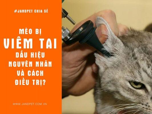 Meo Bi Viem Tai Dau Hieu Nguyen Nhan Va Cach Dieu Tri