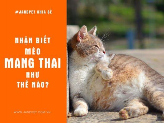 Nhan Biet Meo Mang Thai Nhu The Nao
