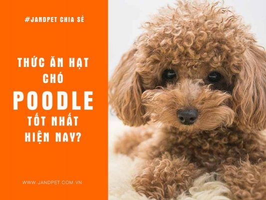 Thuc An Hat Tot Nhat Cho Poodle