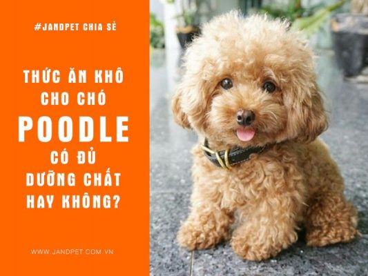 Thuc An Kho Cho Cho Poodle Co Du Duong Chat Khong